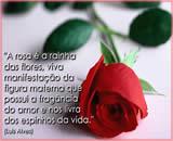 frases sobre rosas